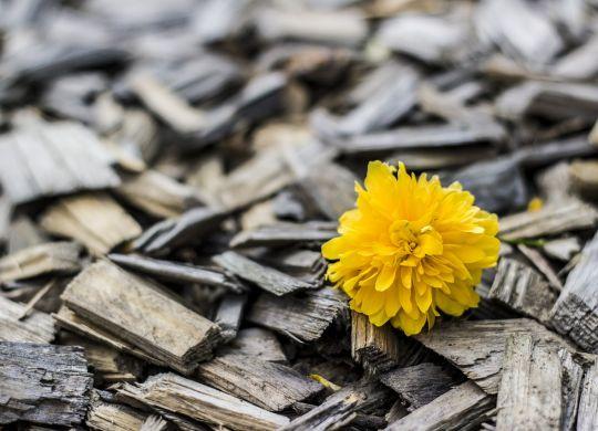 yellow-370256_1280